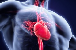 Scientists find what might be responsible for slow heart function under general anaesthesia