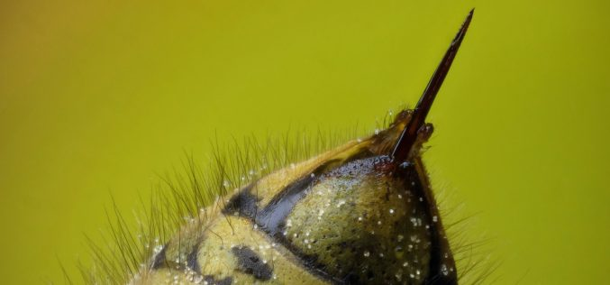 How wasp and bee stinger designs help deliver the pain