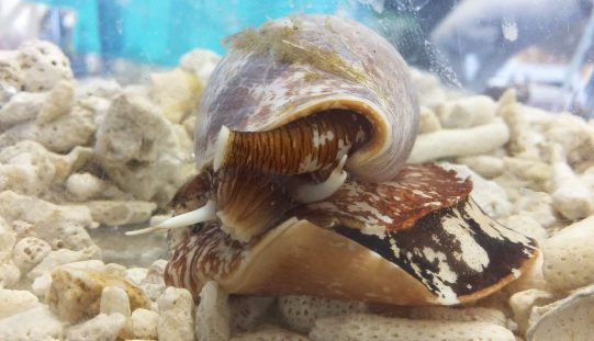 From cone snail venom to pain relief – How conotoxins can be used in pain therapy